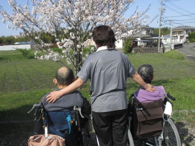 桜英水苑『お花見散歩』